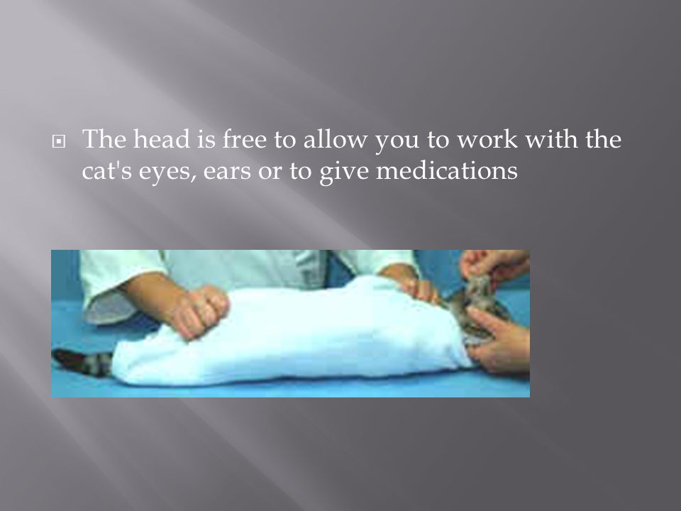 The head is free to allow you to work with the cat s eyes, ears or to give medications