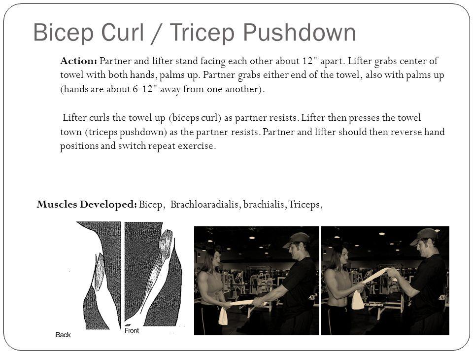 Bicep Curl / Tricep Pushdown