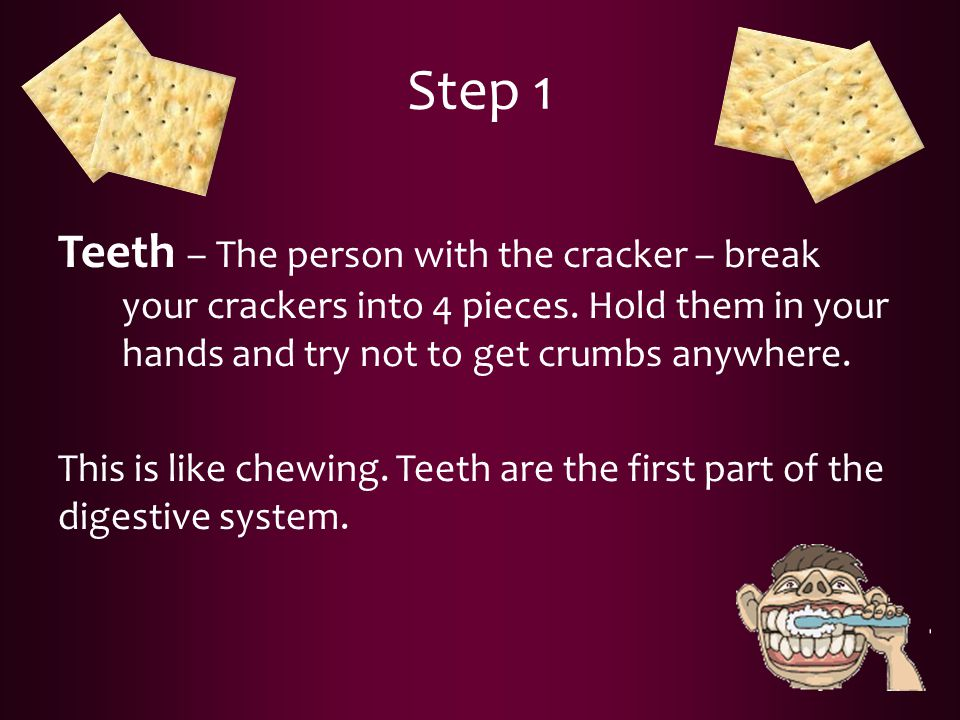Step 1 Teeth – The person with the cracker – break your crackers into 4 pieces. Hold them in your hands and try not to get crumbs anywhere.