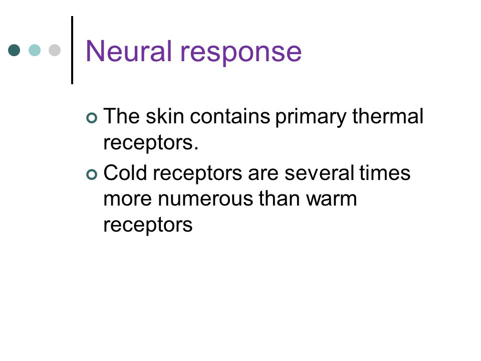 Neural response The skin contains primary thermal receptors.
