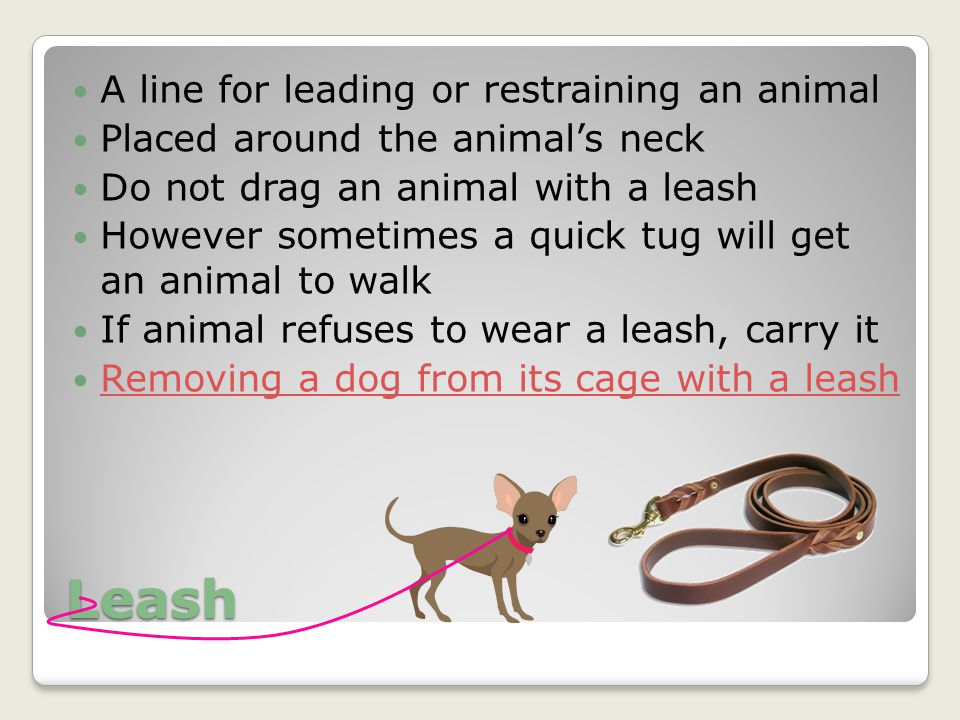 Leash A line for leading or restraining an animal