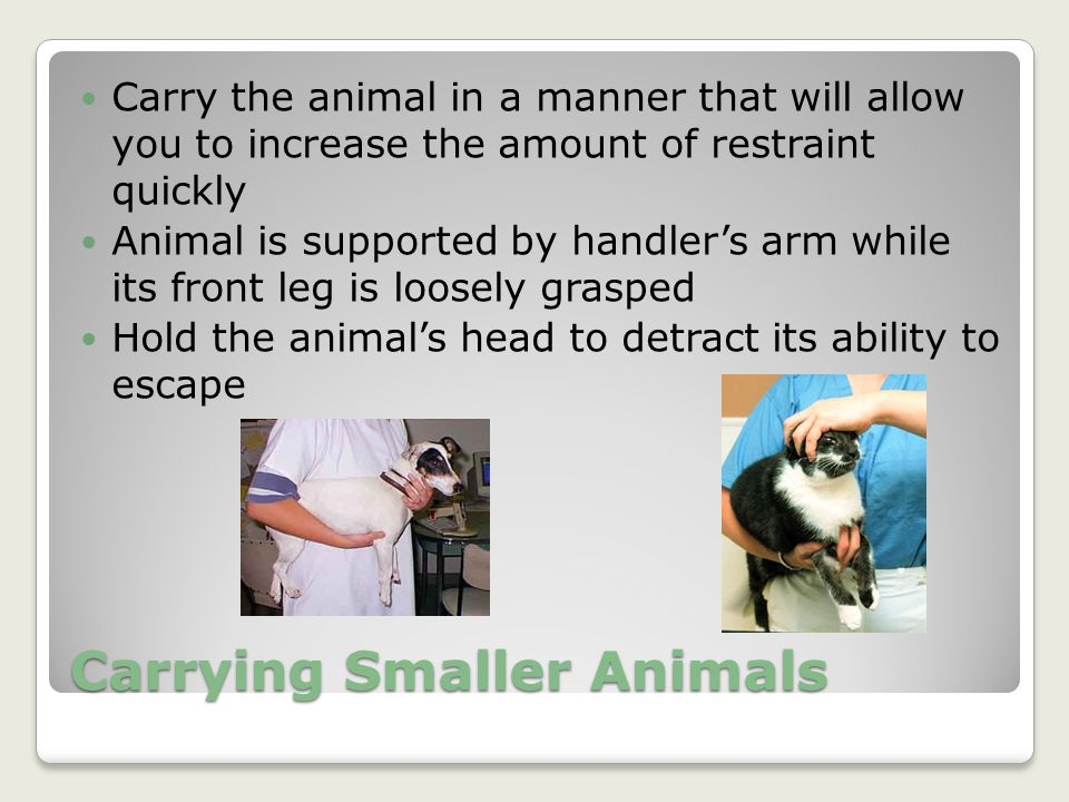 Carrying Smaller Animals