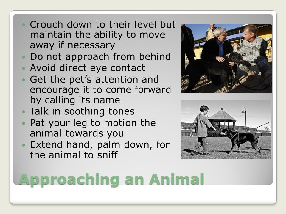 Crouch down to their level but maintain the ability to move away if necessary
