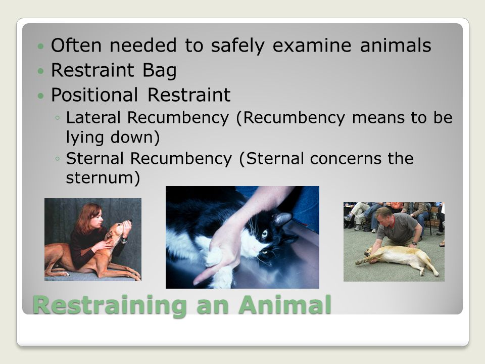 Restraining an Animal Often needed to safely examine animals