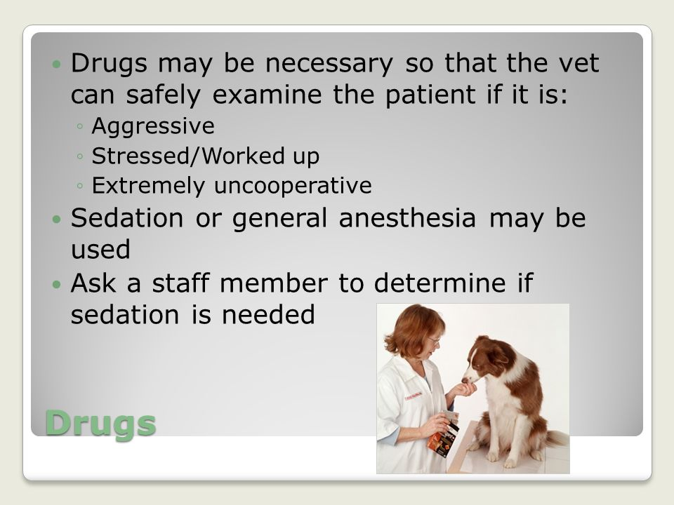 Drugs may be necessary so that the vet can safely examine the patient if it is: