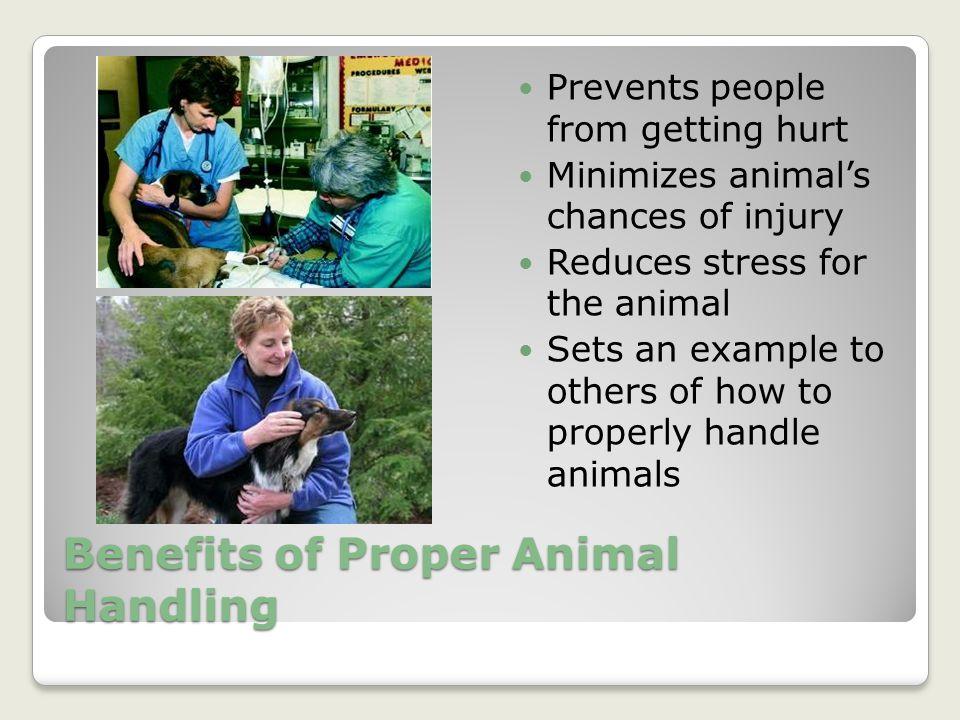 Benefits of Proper Animal Handling