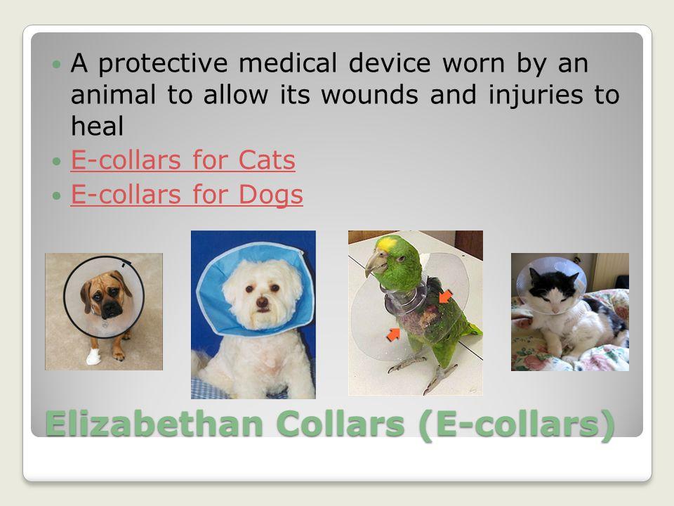 Elizabethan Collars (E-collars)