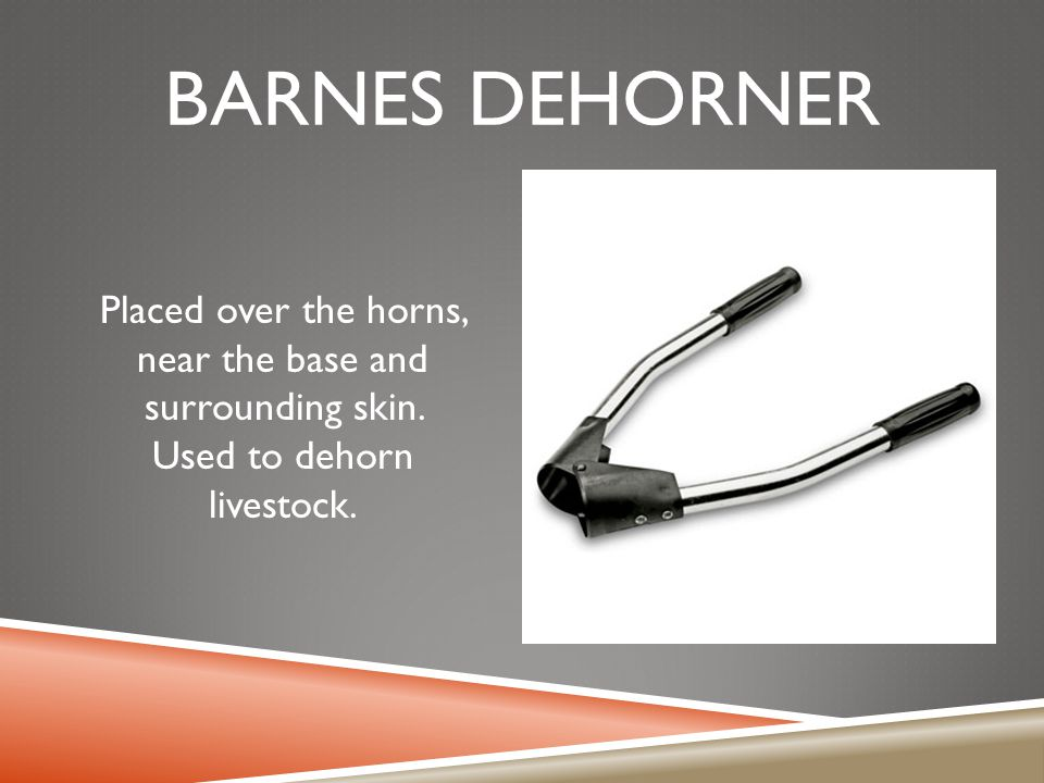 Barnes dehorner Placed over the horns, near the base and surrounding skin.