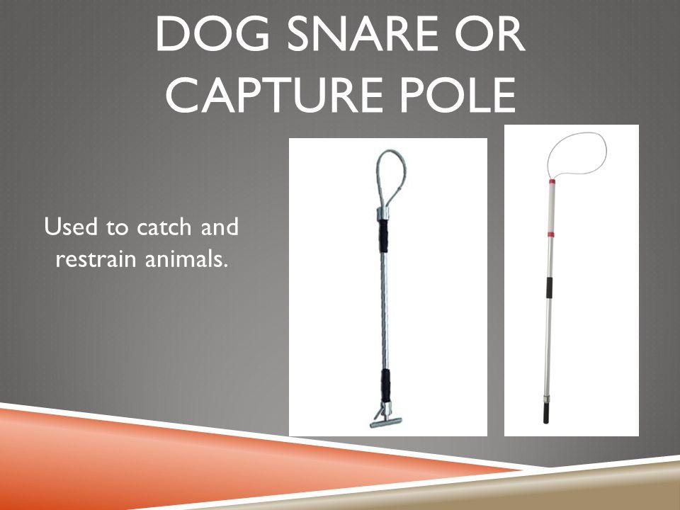 Dog snare or capture pole