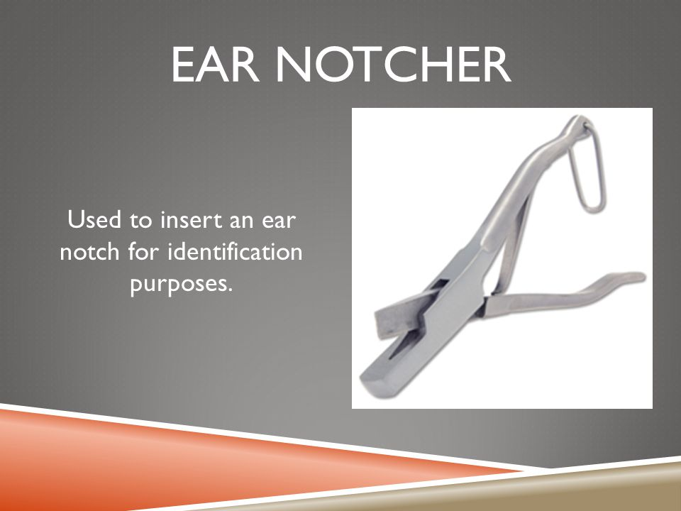 Used to insert an ear notch for identification purposes.