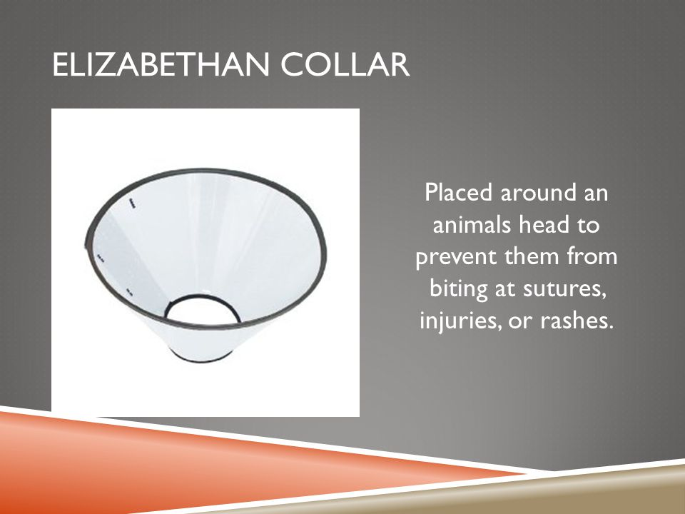 Elizabethan collar Placed around an animals head to prevent them from biting at sutures, injuries, or rashes.