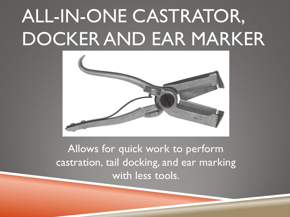 All-in-one castrator, docker and ear marker