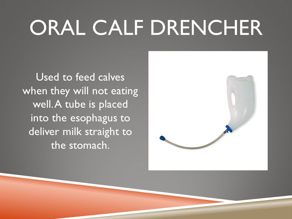 Oral calf drencher Used to feed calves when they will not eating well.