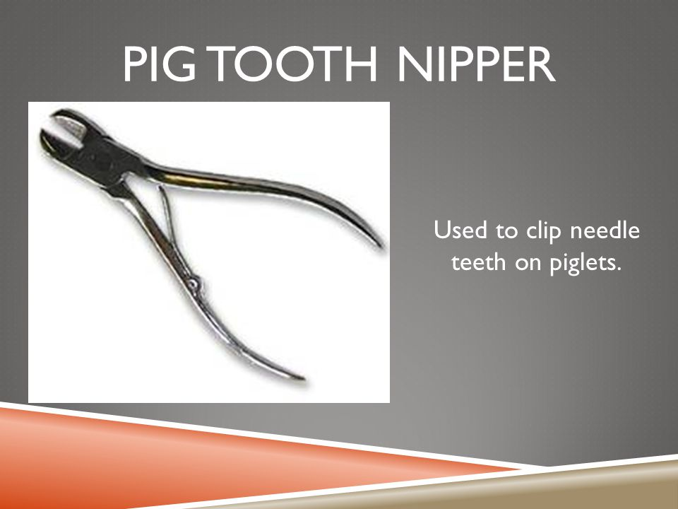Used to clip needle teeth on piglets.