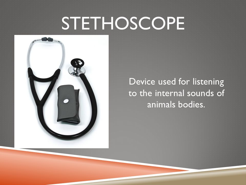 Device used for listening to the internal sounds of animals bodies.