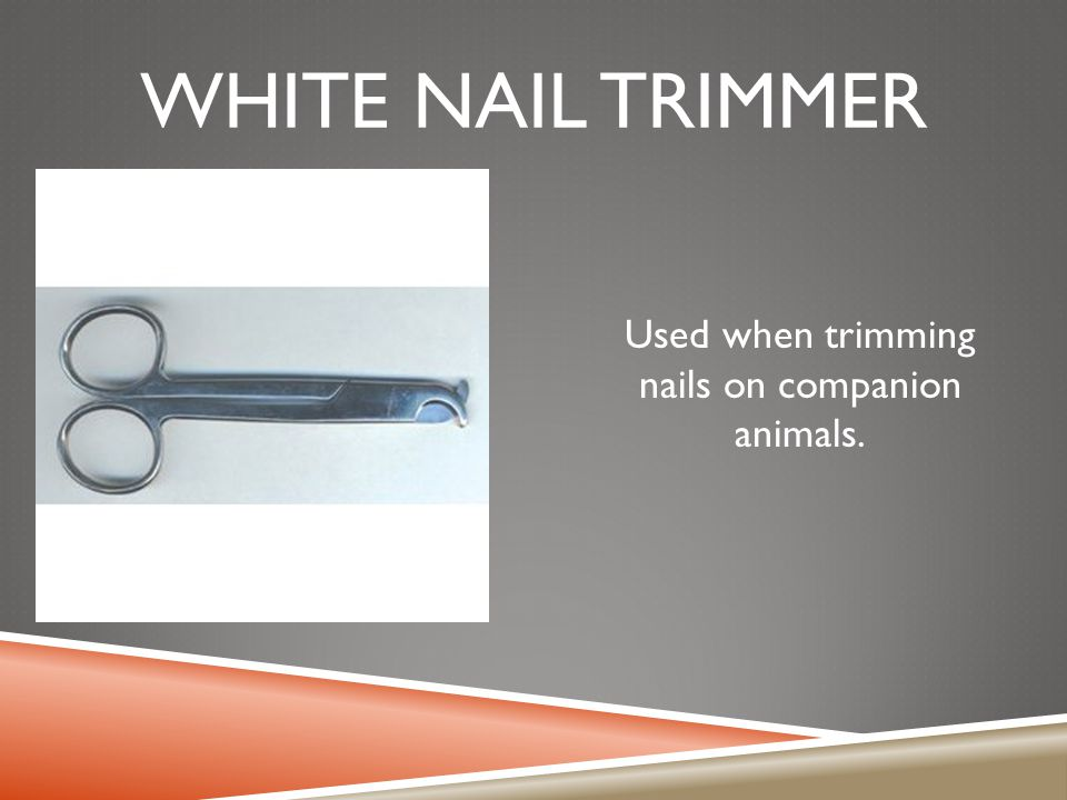 Used when trimming nails on companion animals.