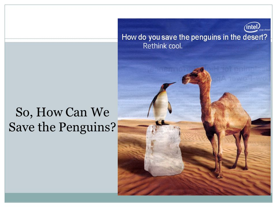 So, How Can We Save the Penguins
