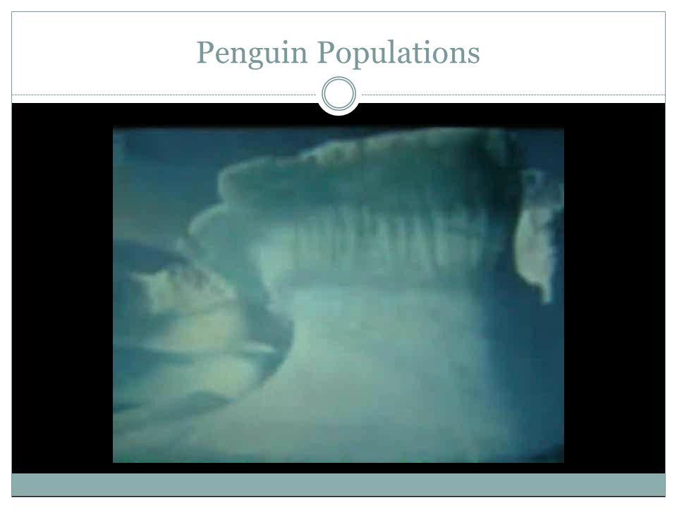 Penguin Populations