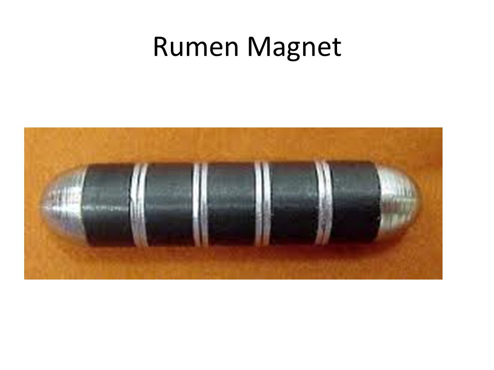 Rumen Magnet