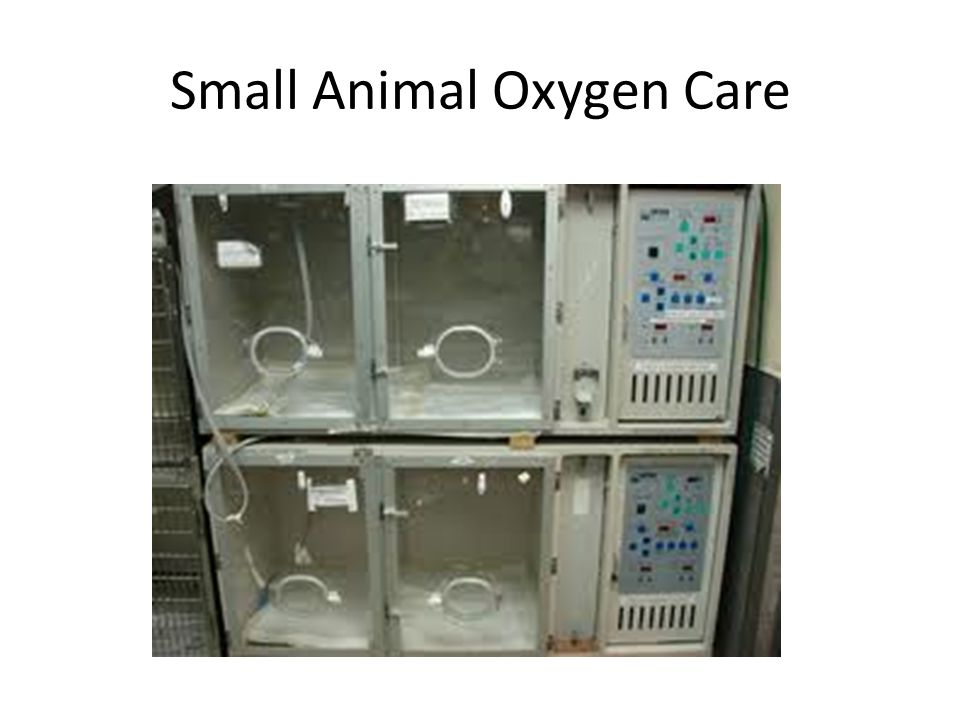 Small Animal Oxygen Care
