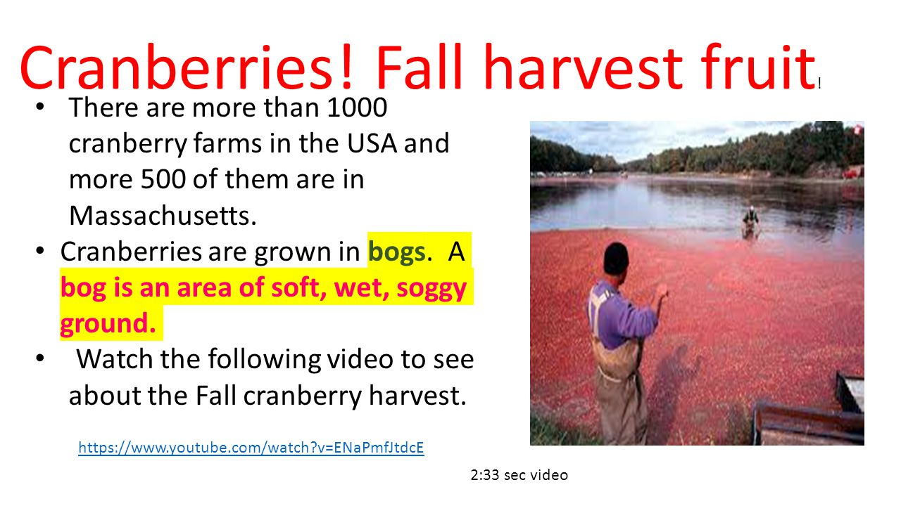Cranberries! Fall harvest fruit!