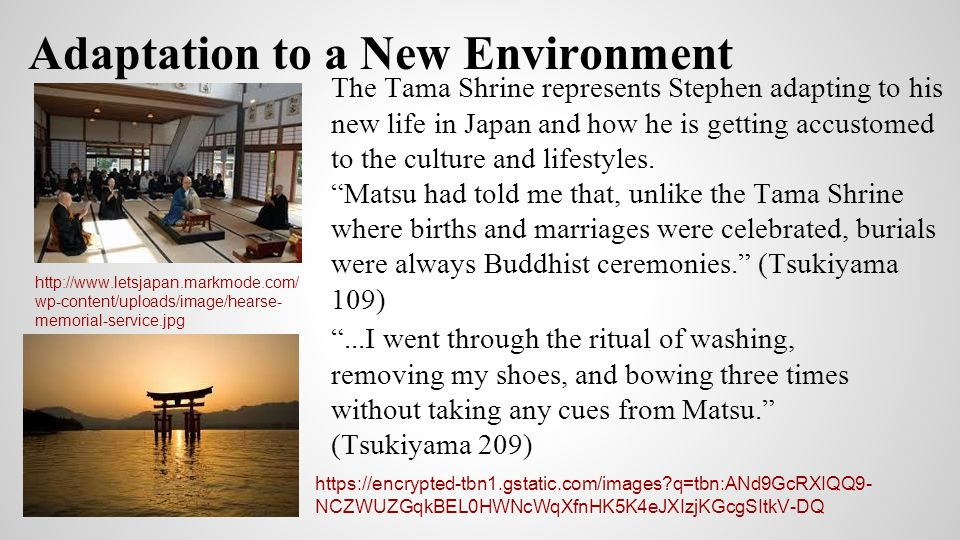 The Unknown . Tama shrine is an example of how little Stephen knows about Matsu, especially in comparison to all Matsu knows about Stephen.