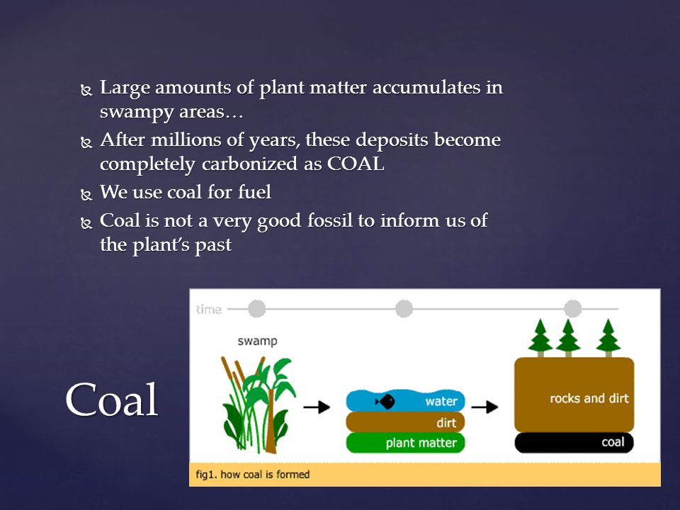 Coal Large amounts of plant matter accumulates in swampy areas…