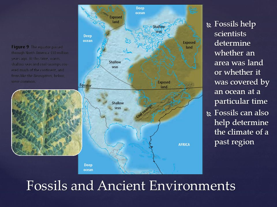 Fossils and Ancient Environments