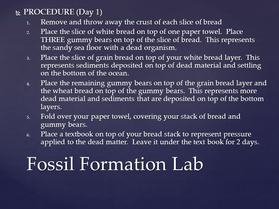Fossil Formation Lab PROCEDURE (Day 1)