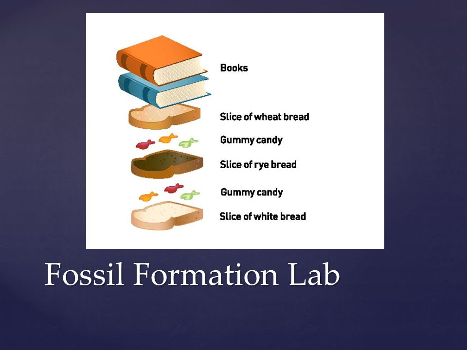 Fossil Formation Lab