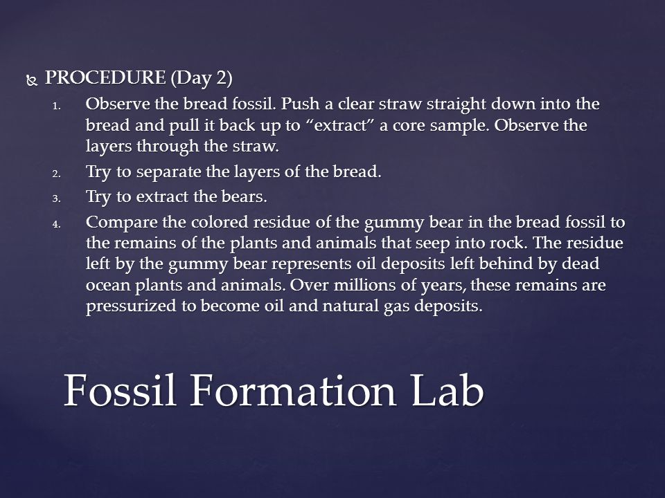 Fossil Formation Lab PROCEDURE (Day 2)