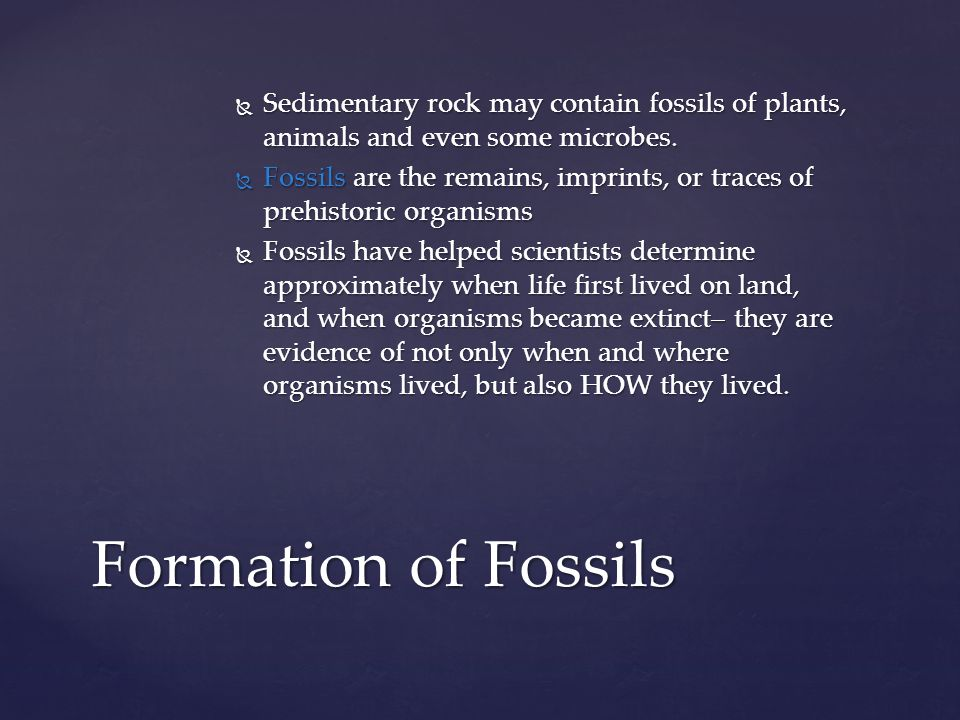 Sedimentary rock may contain fossils of plants, animals and even some microbes.