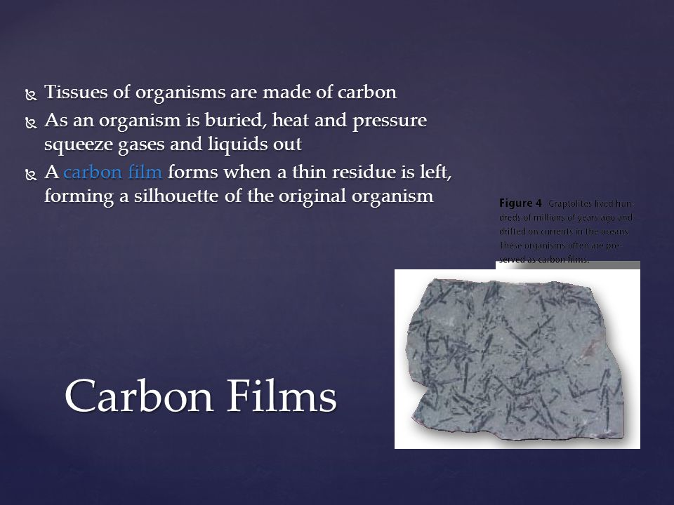Carbon Films Tissues of organisms are made of carbon