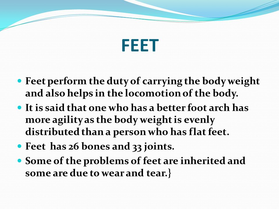 FEET Feet perform the duty of carrying the body weight and also helps in the locomotion of the body.