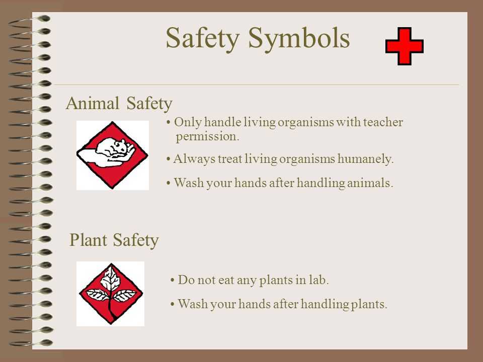 Safety Symbols Animal Safety Plant Safety