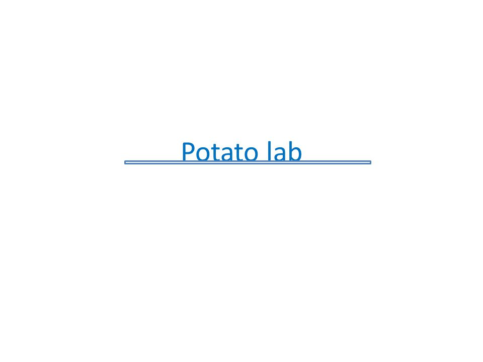 Potato lab