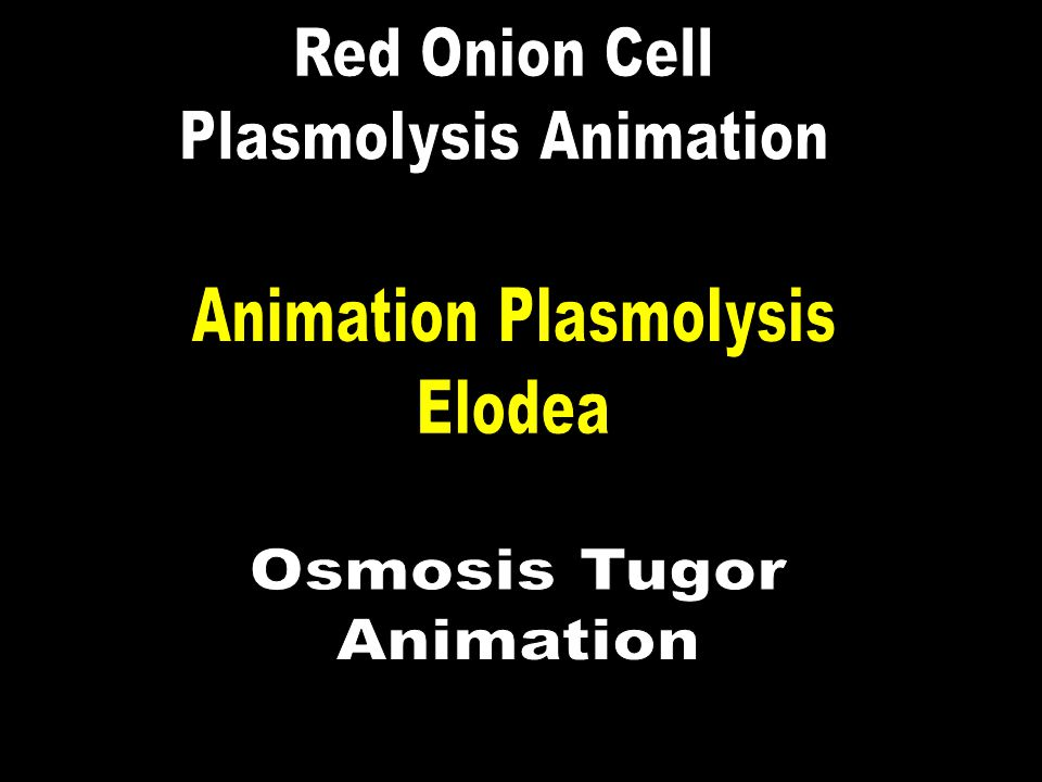 Plasmolysis Animation