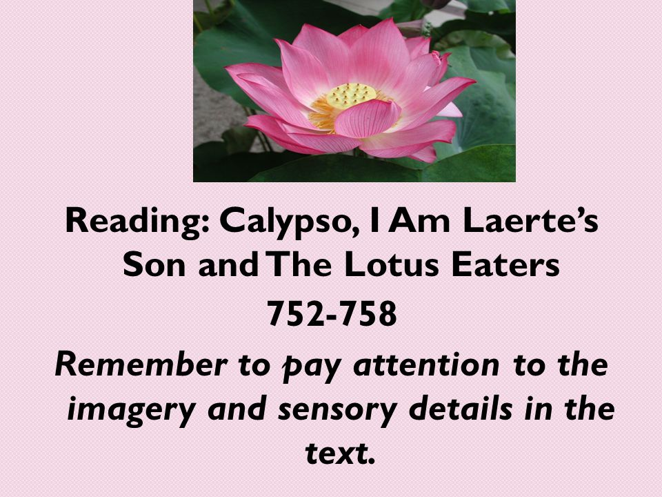 Reading: Calypso, I Am Laerte's Son and The Lotus Eaters 752-758 Remember to pay attention to the imagery and sensory details in the text.