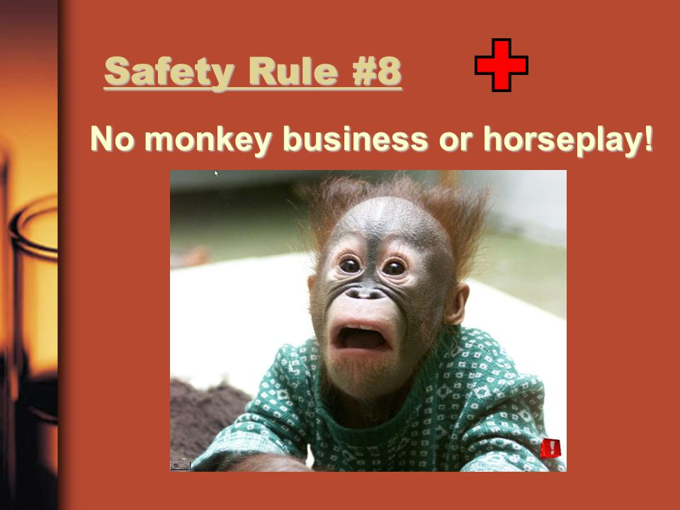 No monkey business or horseplay!