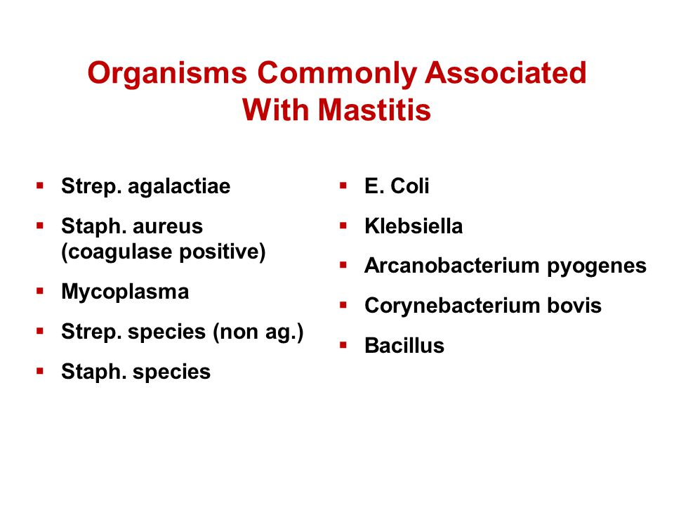Organisms Commonly Associated With Mastitis