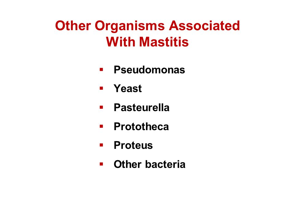 Other Organisms Associated With Mastitis
