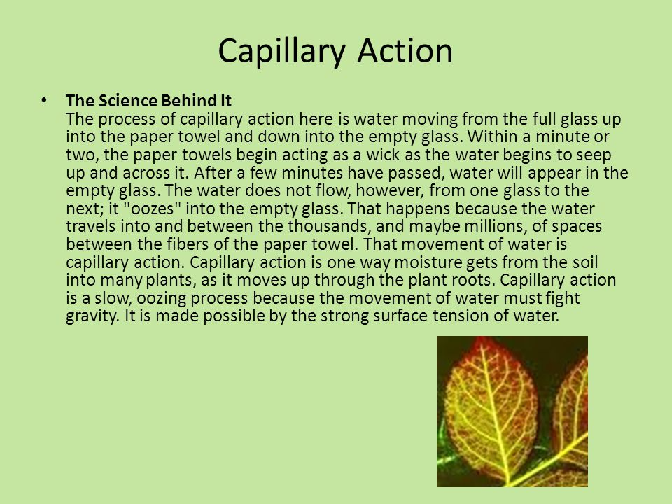 Capillary Action