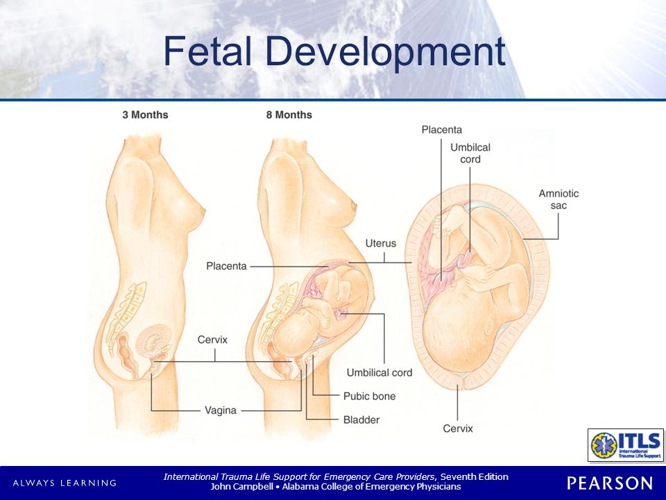 Viability Assessment NOTE: Table 19-1 Assessment of a pregnancy.