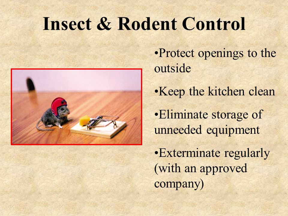 Insect & Rodent Control