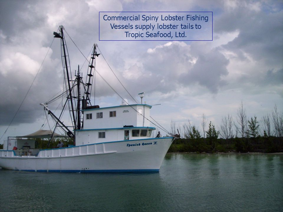 Commercial Spiny Lobster Fishing Vessels supply lobster tails to Tropic Seafood, Ltd.