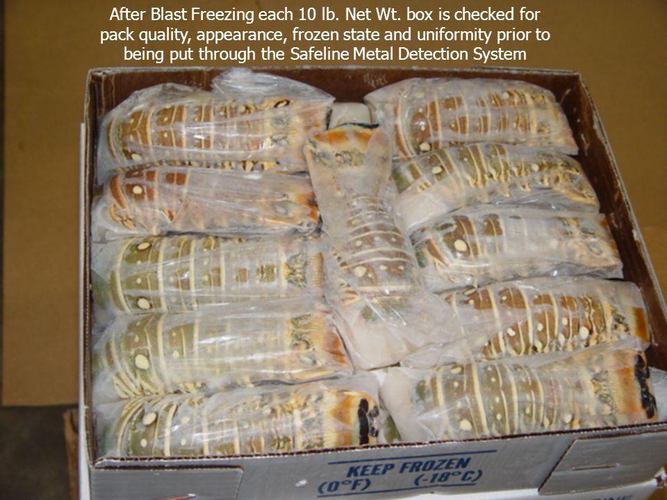 After Blast Freezing each 10 lb. Net Wt