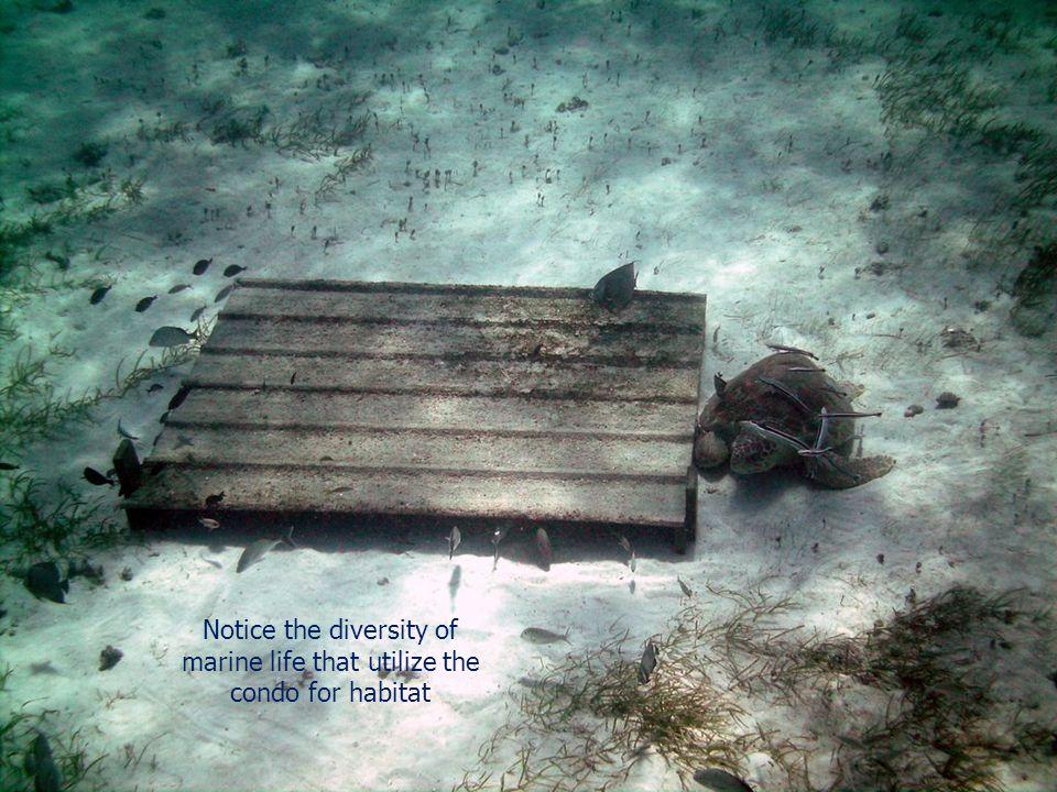 Notice the diversity of marine life that utilize the condo for habitat