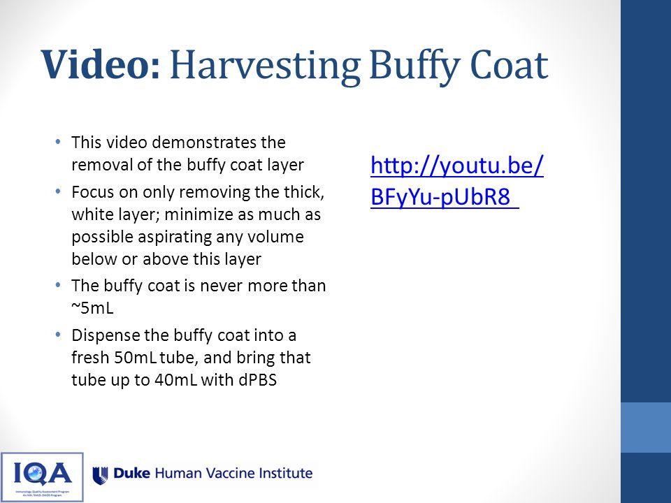 Video: Harvesting Buffy Coat