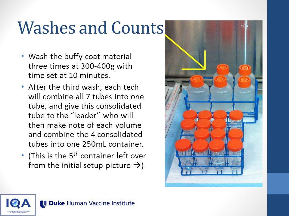 Washes and Counts Wash the buffy coat material three times at 300-400g with time set at 10 minutes.