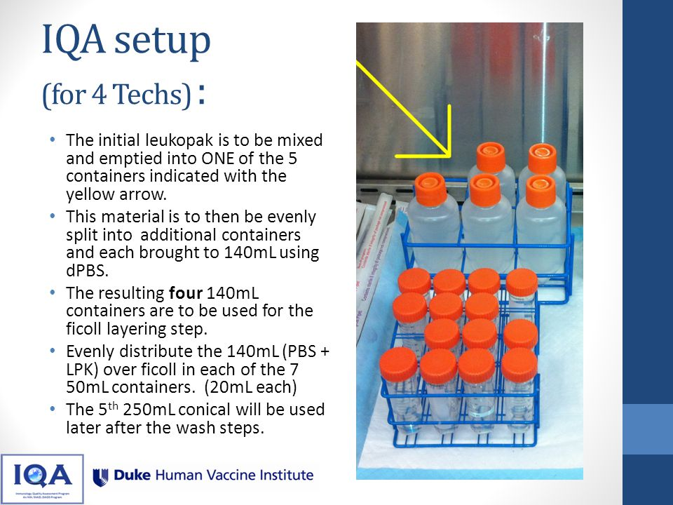 IQA setup (for 4 Techs) : The initial leukopak is to be mixed and emptied into ONE of the 5 containers indicated with the yellow arrow.